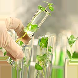 Avesence, Dermesence, Antioxidant, Plant extract, Botanical, Healthy, Skincare