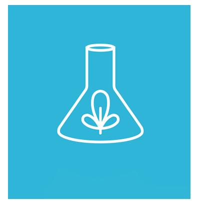 No Propylene Glycol